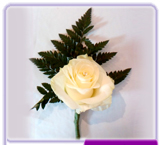 Buttonhole Rose